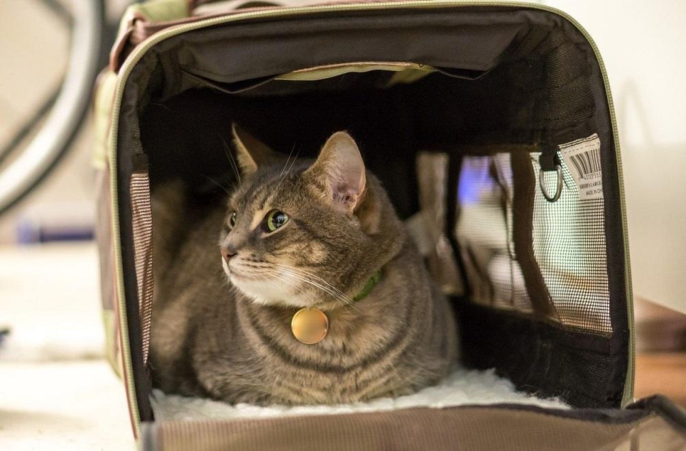 Перевозка кошек в самолёте по России правила